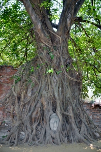 Tree hungry.  Tree want eat Buddha.