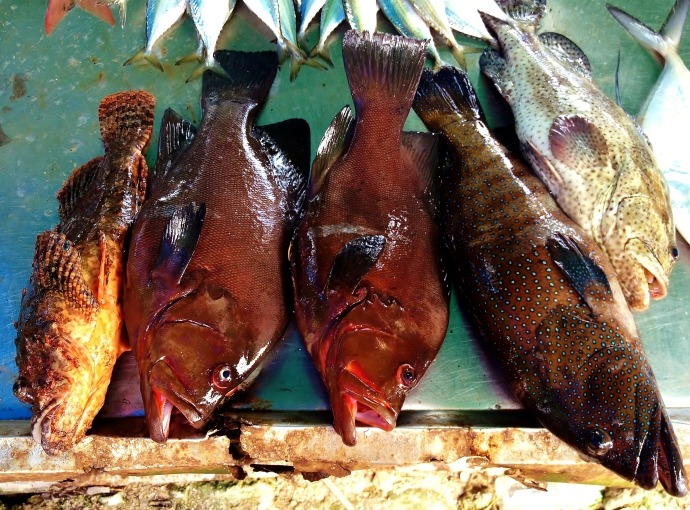 Heeeeerrrrre fishy fishy