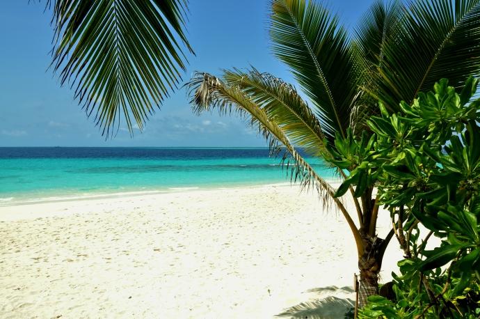 Hello paradise