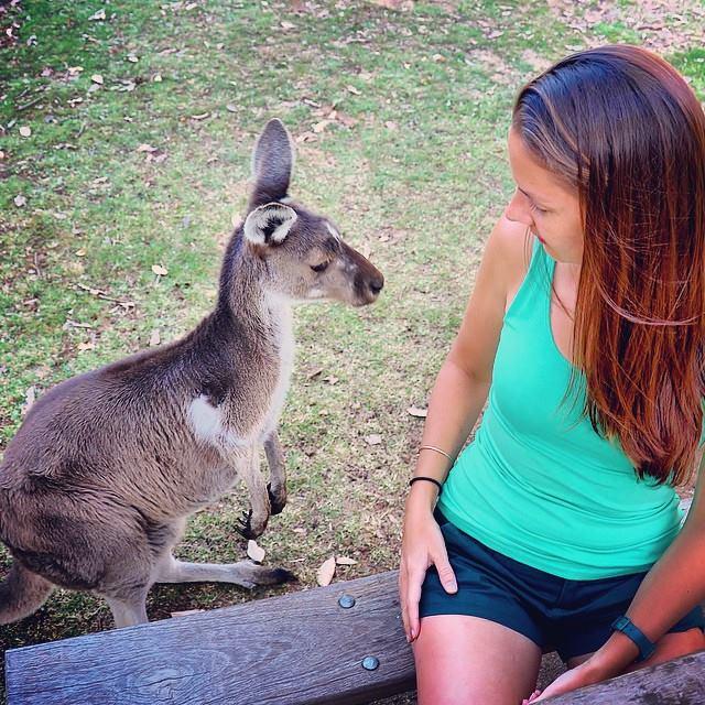 Kangaroo peanut theif