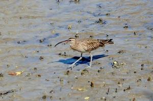 Ubiquitous Seabird