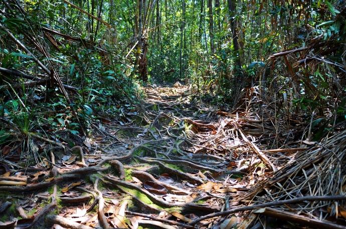 Bako Trail